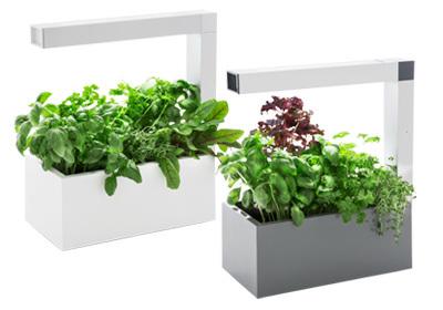 tregren mini potager d int rieur herbie led sans titre dealmix. Black Bedroom Furniture Sets. Home Design Ideas